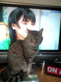 あみちゃんのウェルかめ情報(123話)